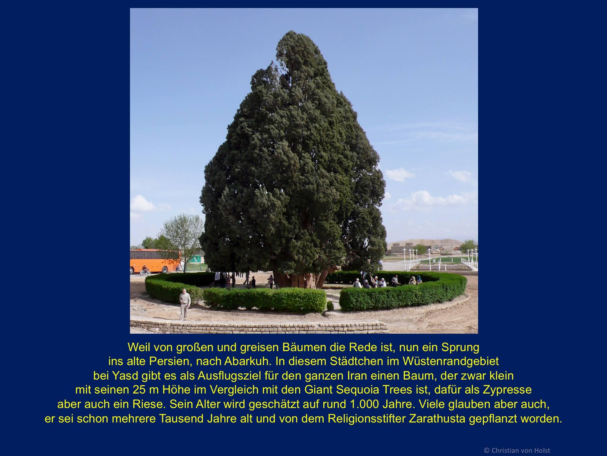 Buchsdinos und weitere Naturriesen  Abarkuh im Iran: grösste und älteste Zypresse des Landes
