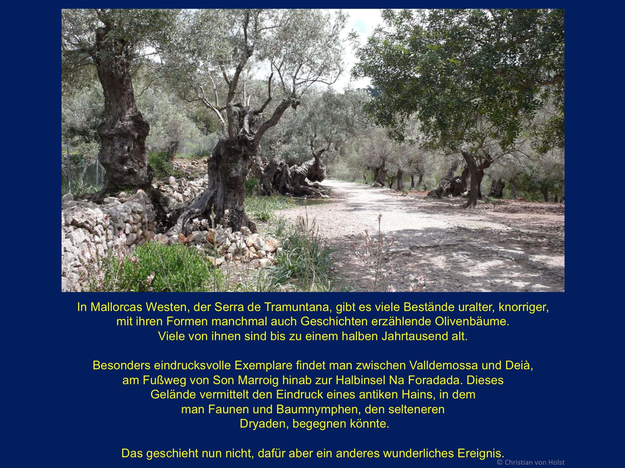 Serra de Tramuntana auf Mallorca: Abstieg zu Sa Foradada