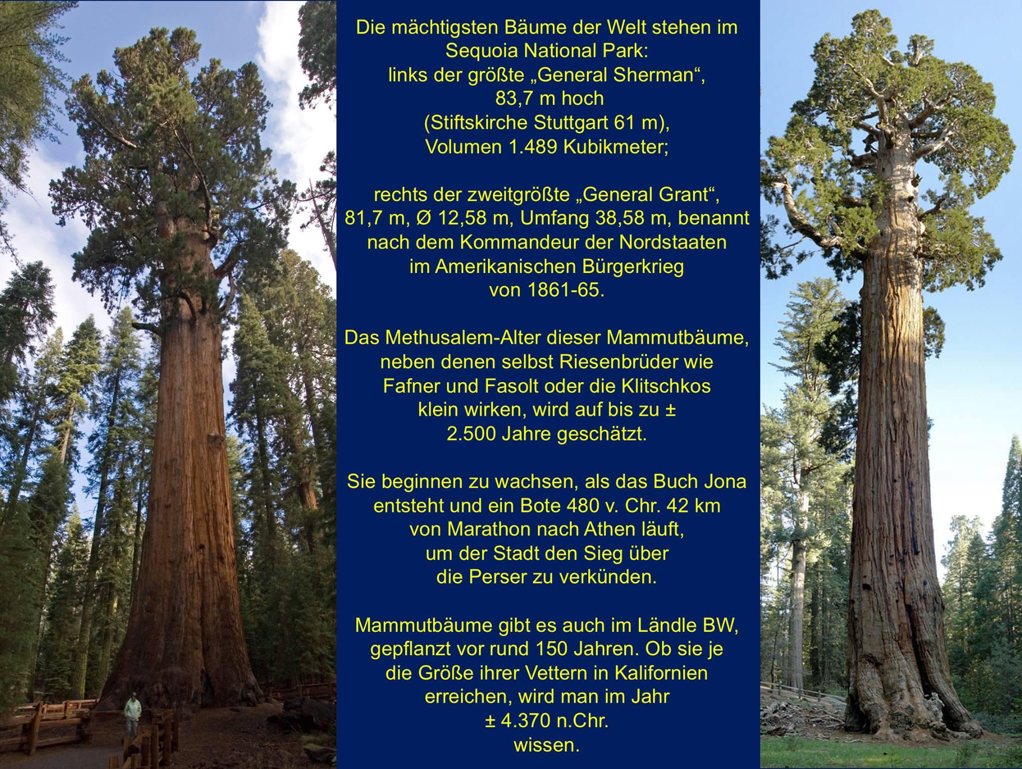 Buchsdinos und weitere Naturriesen – Sequoia National Park: Mammutbäume nach den Gegnern im Unabhängigkeitskrieg benannt