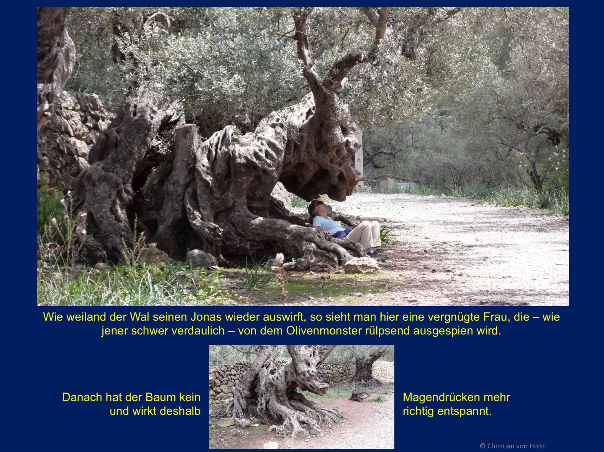 Olivenbaum, Jahrhunderte alt, speit ähnlich wie der Wal eine Frau aus