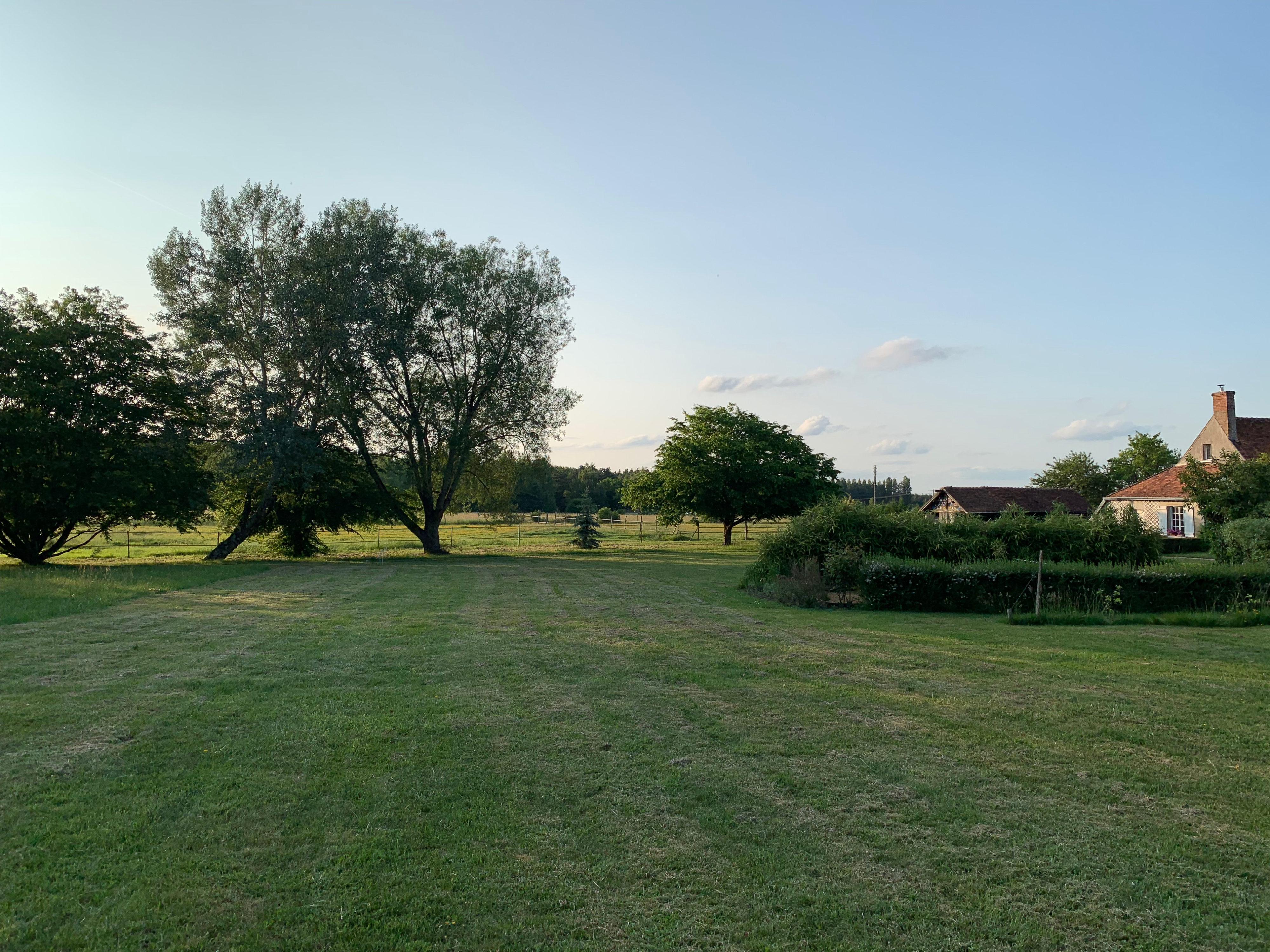 Waldsaum bei Cheverny