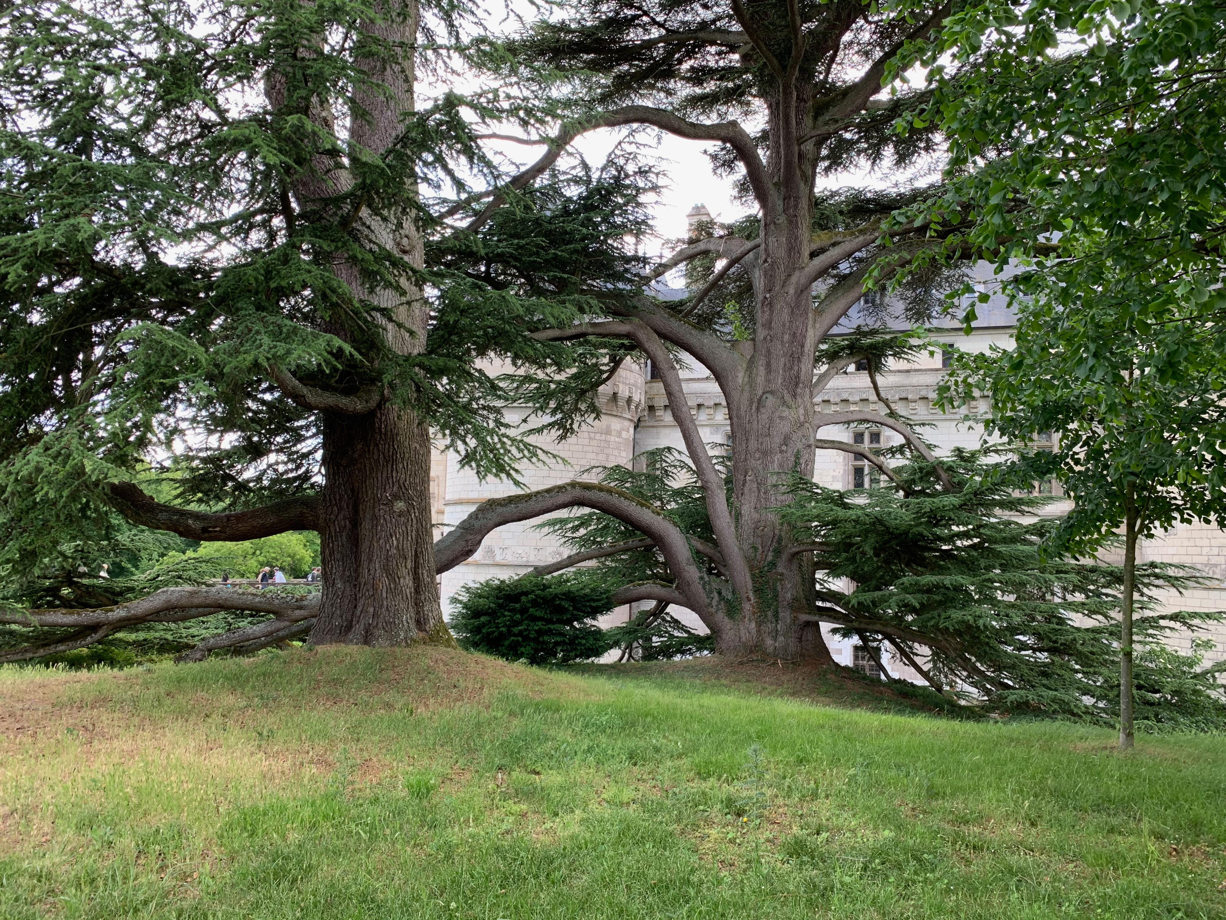 Chaumont, das wehrhafte Schloss über der Loire herrlicher Baumbestand