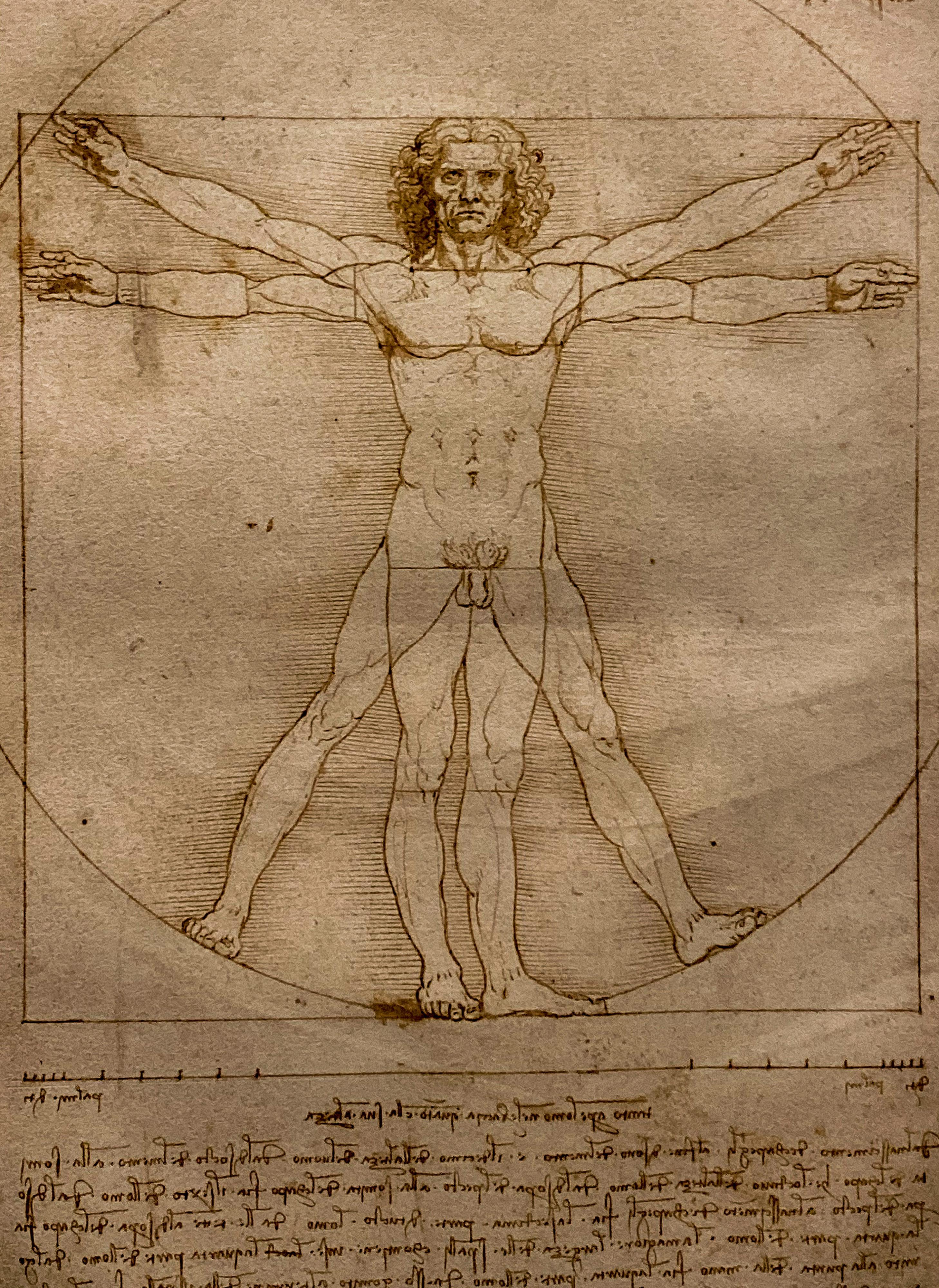 Leonardo Vitruvianischer Mensch Detail