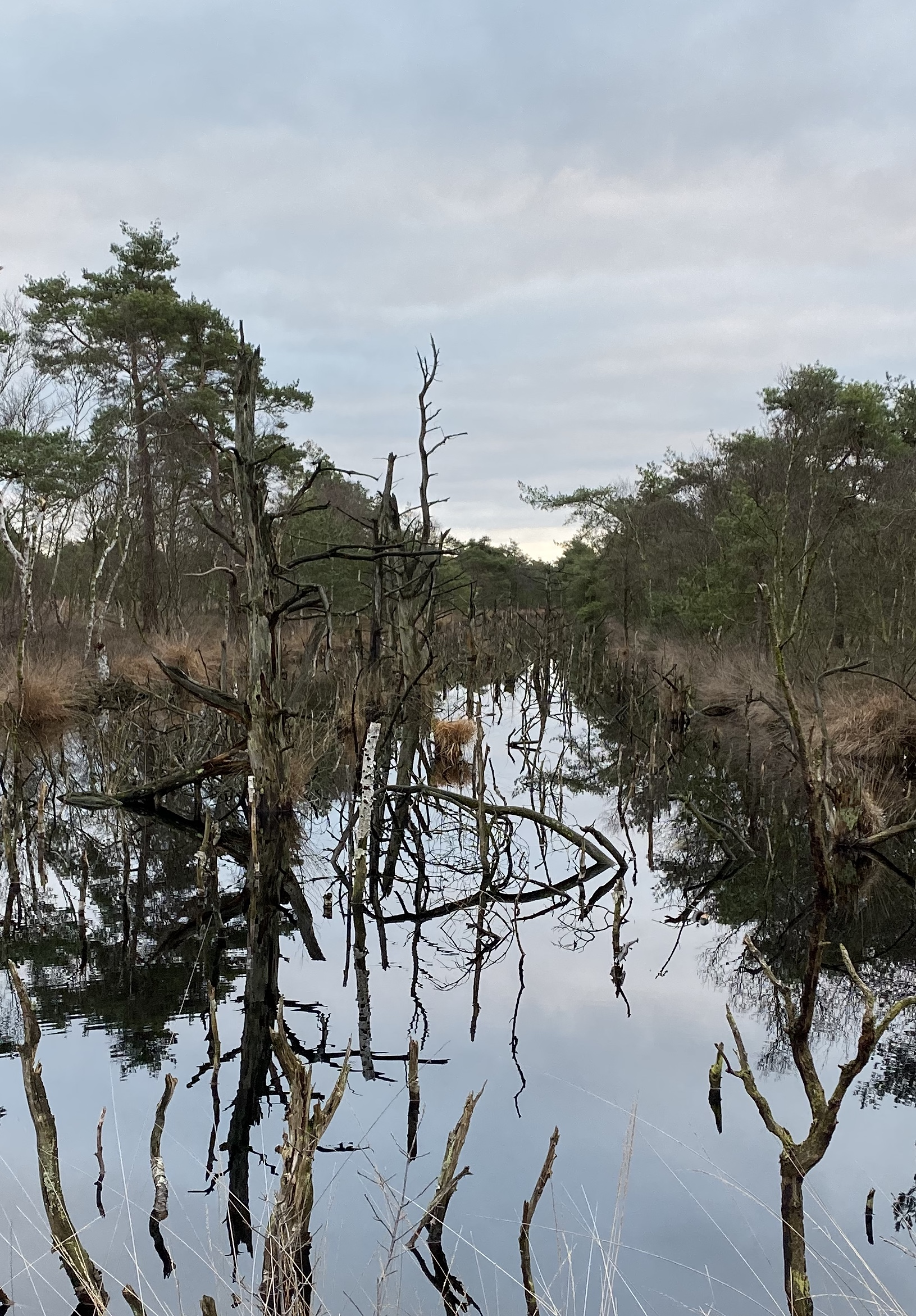 Moorteiche im Hohen Moor 4