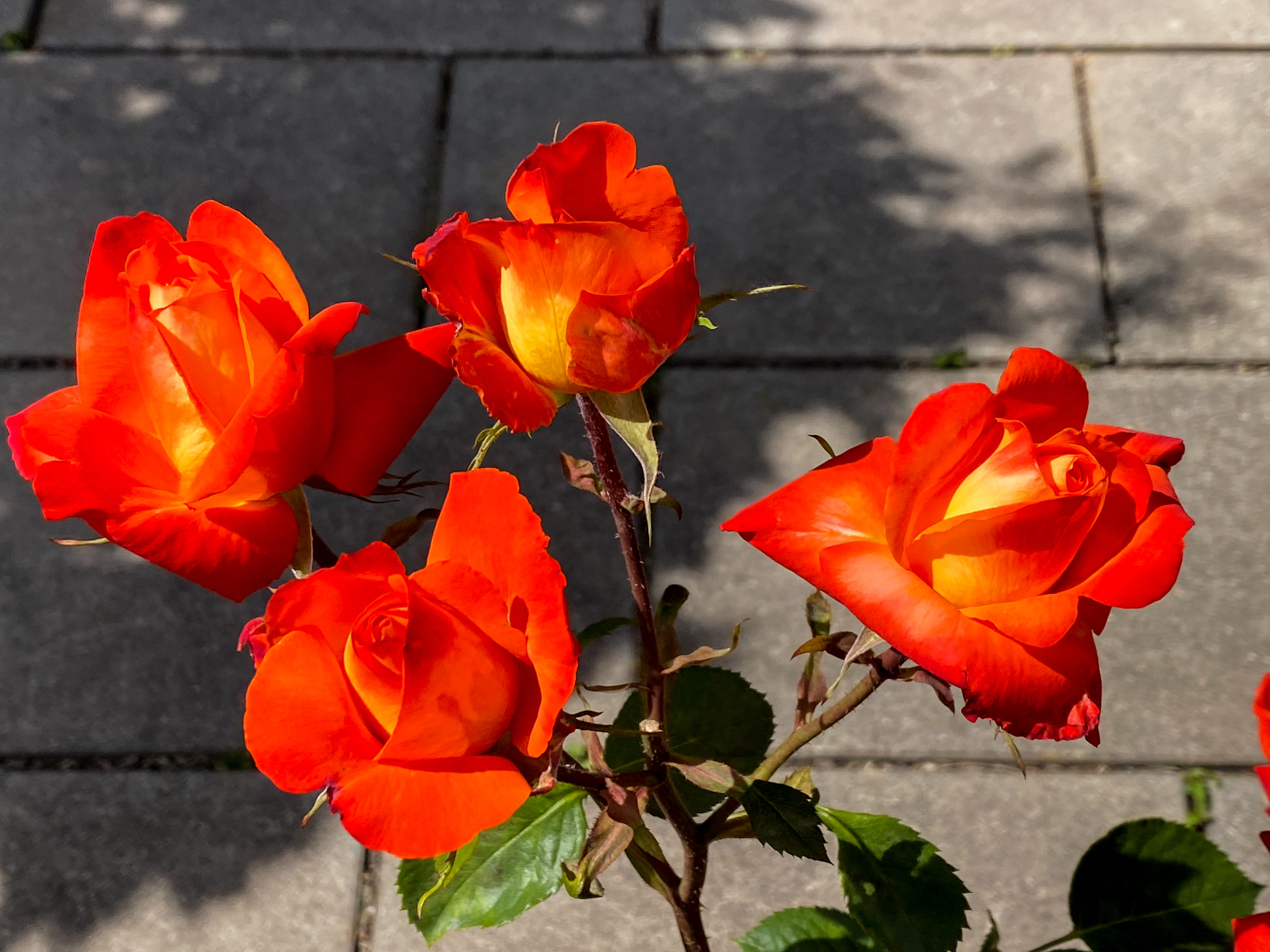 Pfingstgrüße und beste Wünsche Rosengarten