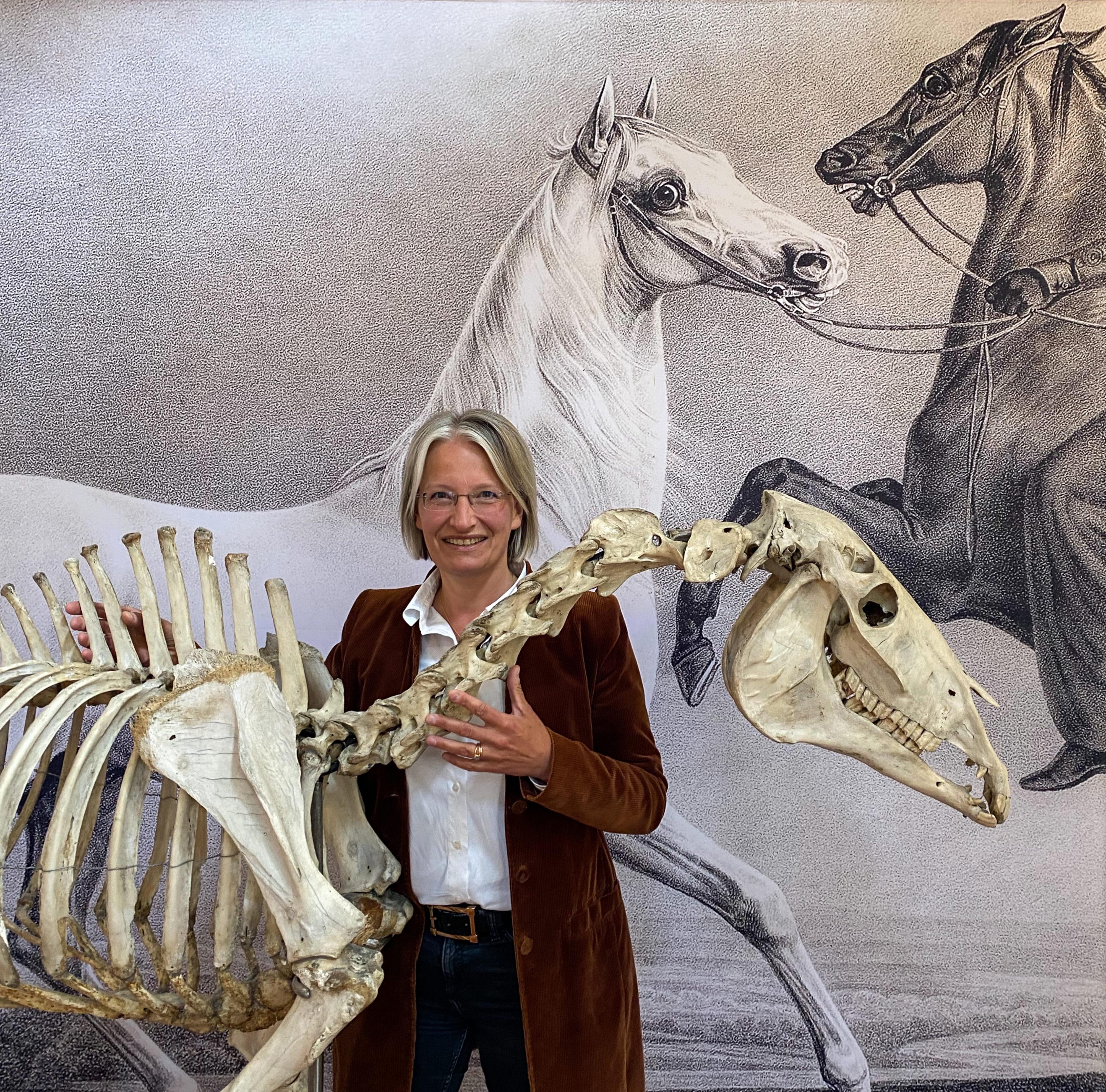 Skelett von Bairactar im Haupt- und Landgestüt Marbach mit Astrid Velsen