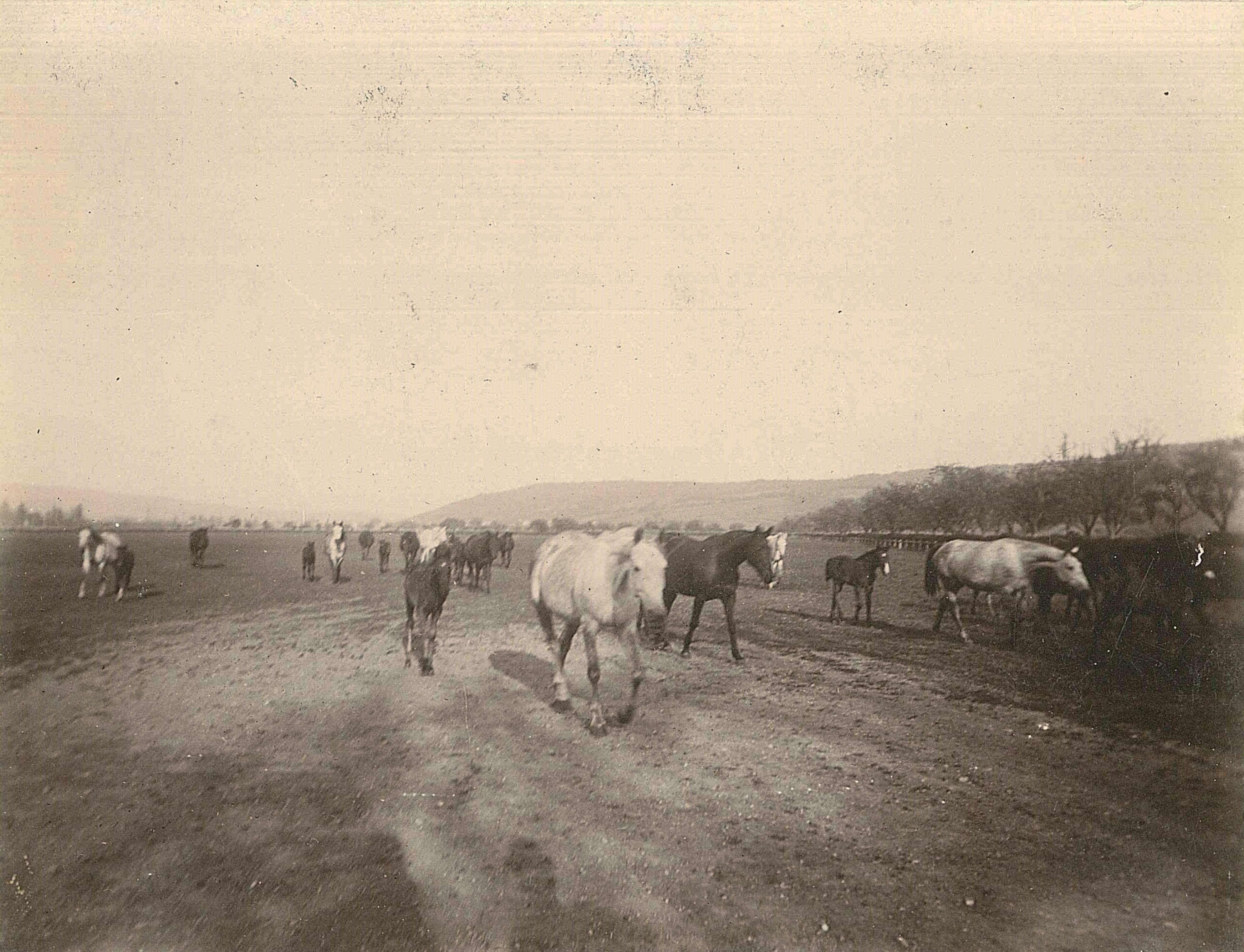 Araberpferd Stuten Fohlen Gestüt Weil Philipp Herzog von Württemberg