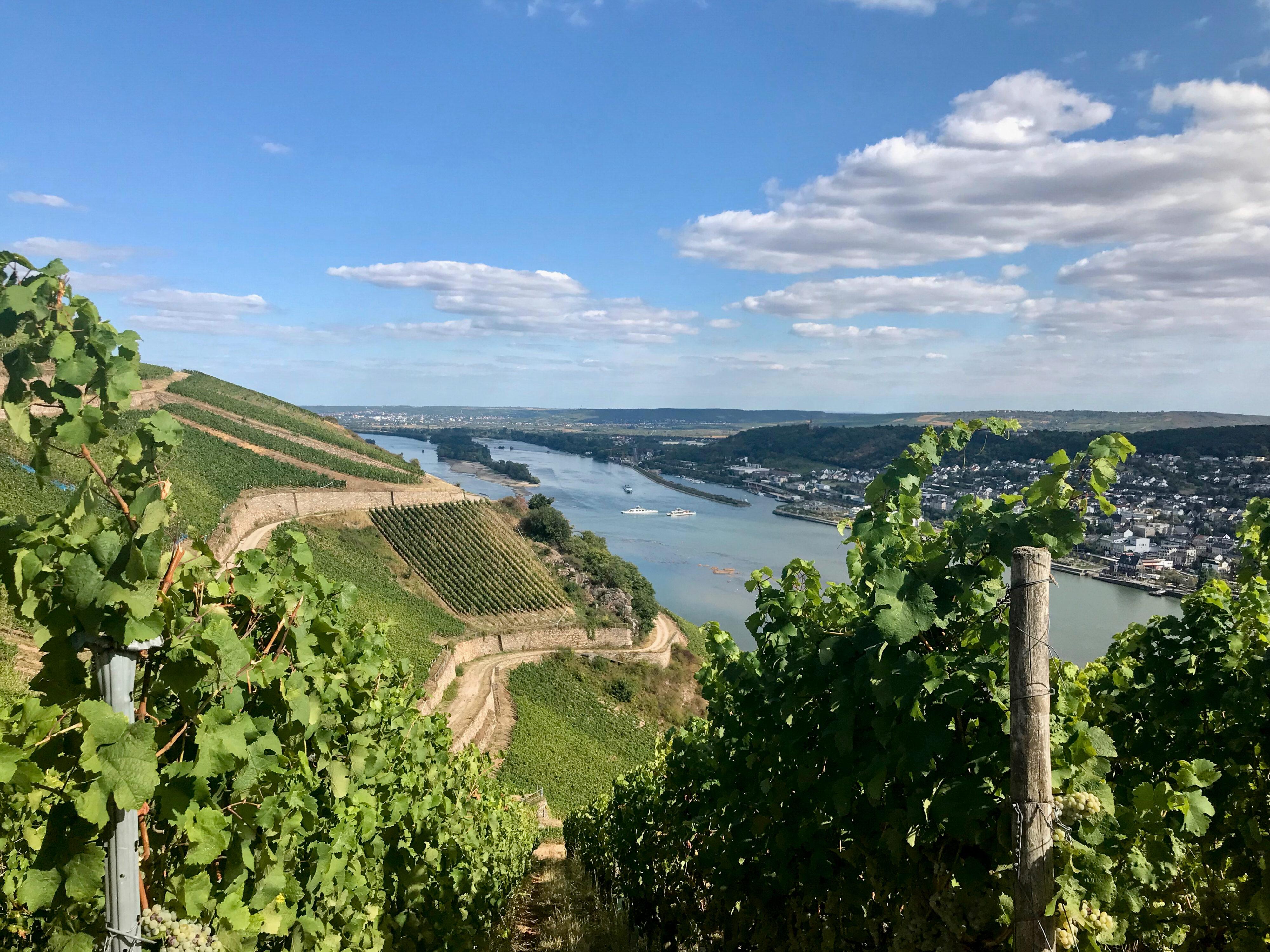 SUV-Kofferraum und Rheinwanderung bei Rüdesheim