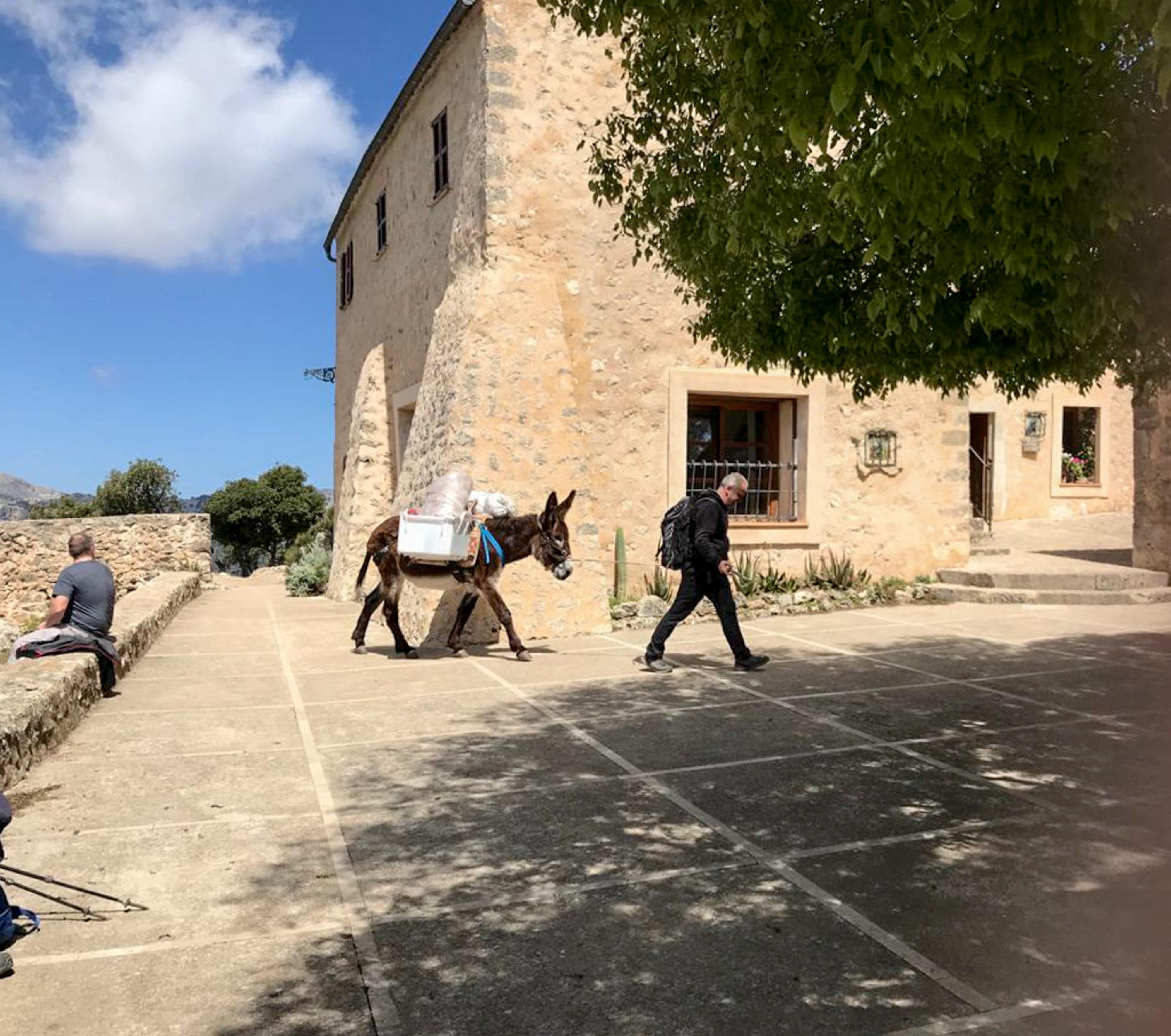 Castell d'Alaró im Landesinneren mit Esel