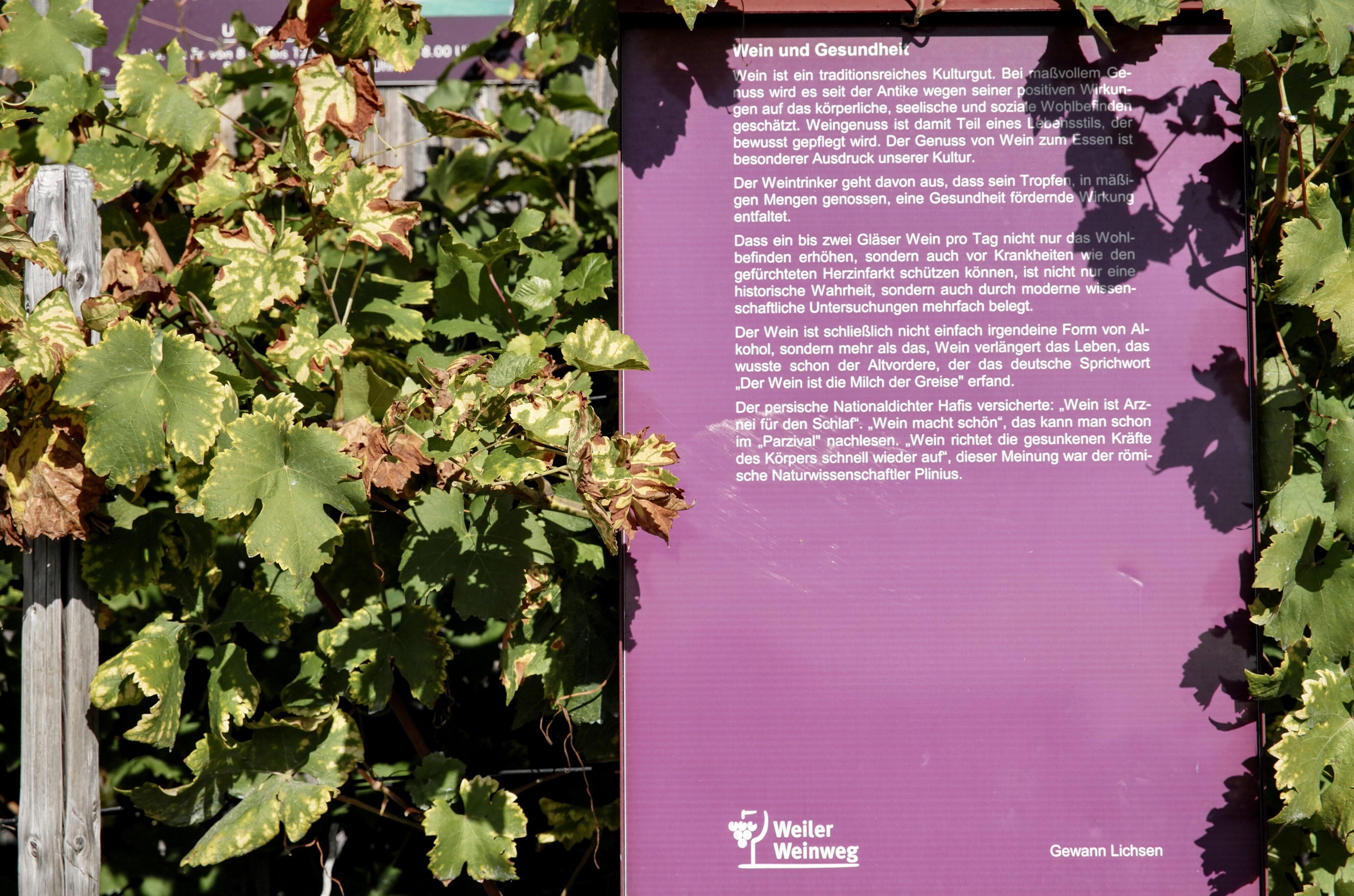 Weiler Weinweg Infotafel zum Weingenuss