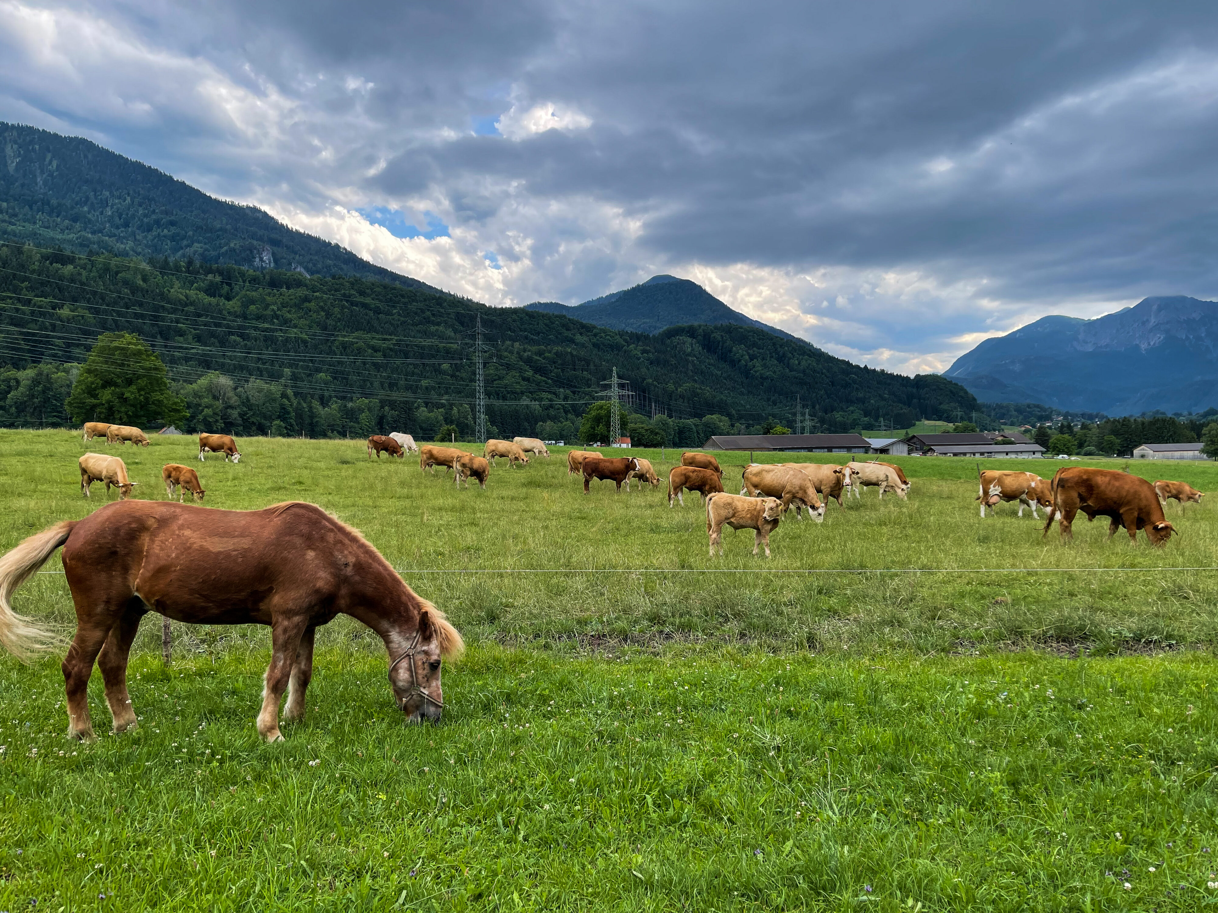 Erharthof: Tier- und Menschenwohl in einem: vorne eines der fünf Pferde für die Gäste