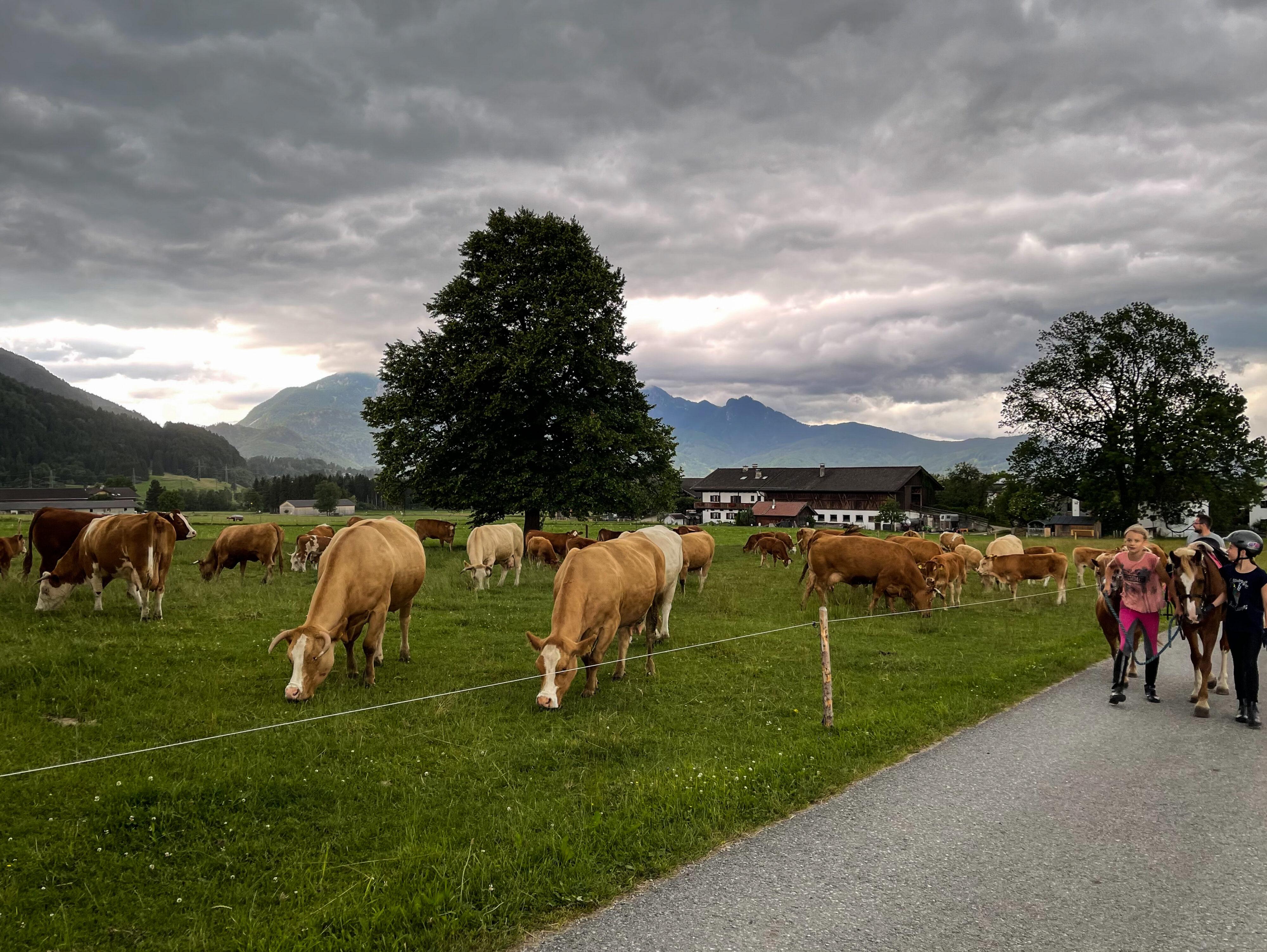 Erharthof: Tier- und Menschenwohl in einem: Rückkehr der jungen Reiterinnen vor dem Regen